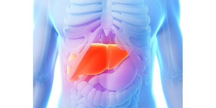 the-liver-helps-to-clean