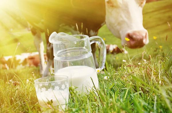 ये है 15 फ़ायेदे गाय के दूध पीने के ( cow milk benefits and the way to drink milk )