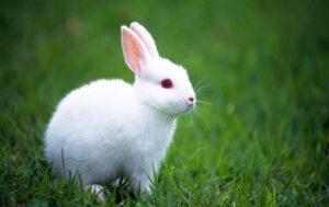 white_rabbit-t3