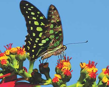तितली से ( butterfly )