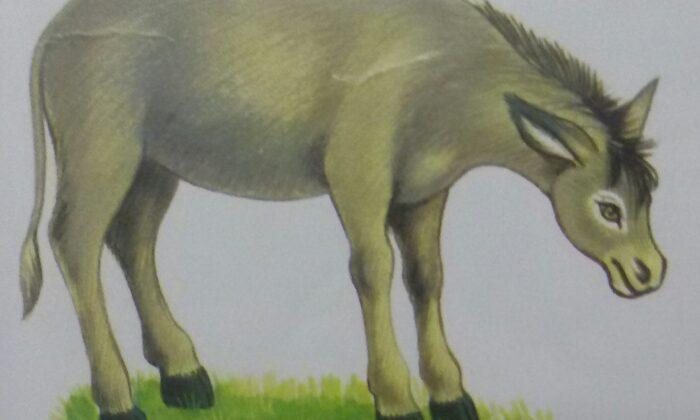 मुर्ख गधा ( poor donkey )