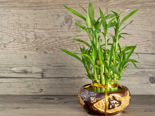 22-1382441076-bamboo
