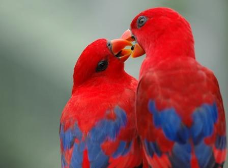 beautiful-love-birds-wallpapers5