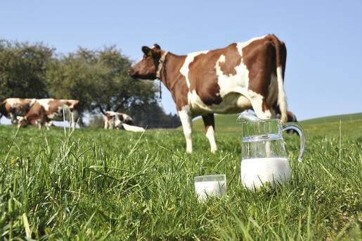app-cow-milk