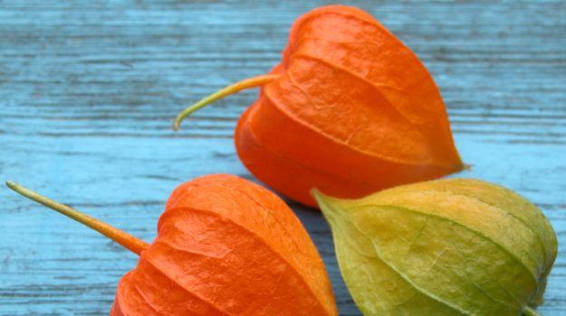 अश्वगंधा में छिपा है इन 7 समस्याओ का हल ( ashwagndha benefits )