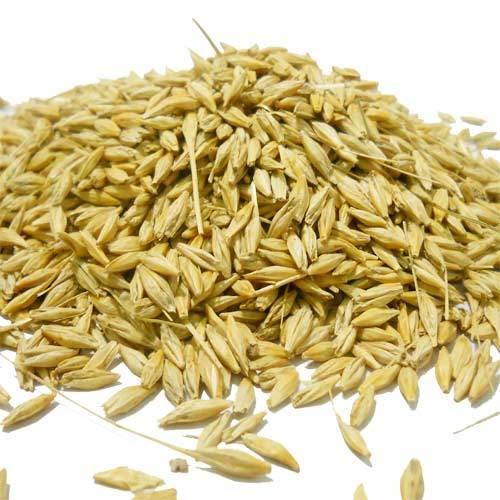 barley-jau-500x500