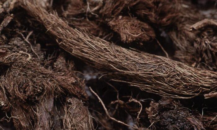 पहाड़ो की जटामांसी के कई है फायेदे ( benefits of jatamansi )
