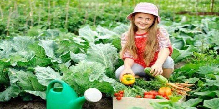 करना चाहे तो गमलो में भी हो सकती है खेती ( in pot cultivation in agriculture )