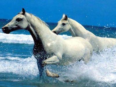 घोड़ो की भूख ( hungry horses in hindistory )
