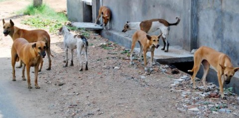 dogs-in-street-awara-kutte