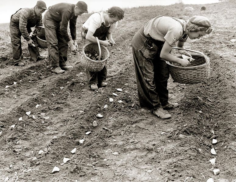 men_and_women_planting_potatoes_circa_1950