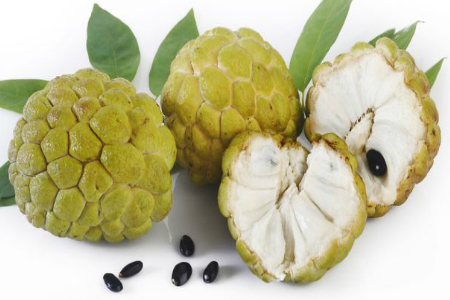 सीताफल में है ये 8 अद्भुत फायदे ( the countless benefits of eating custard apple in healthtips )