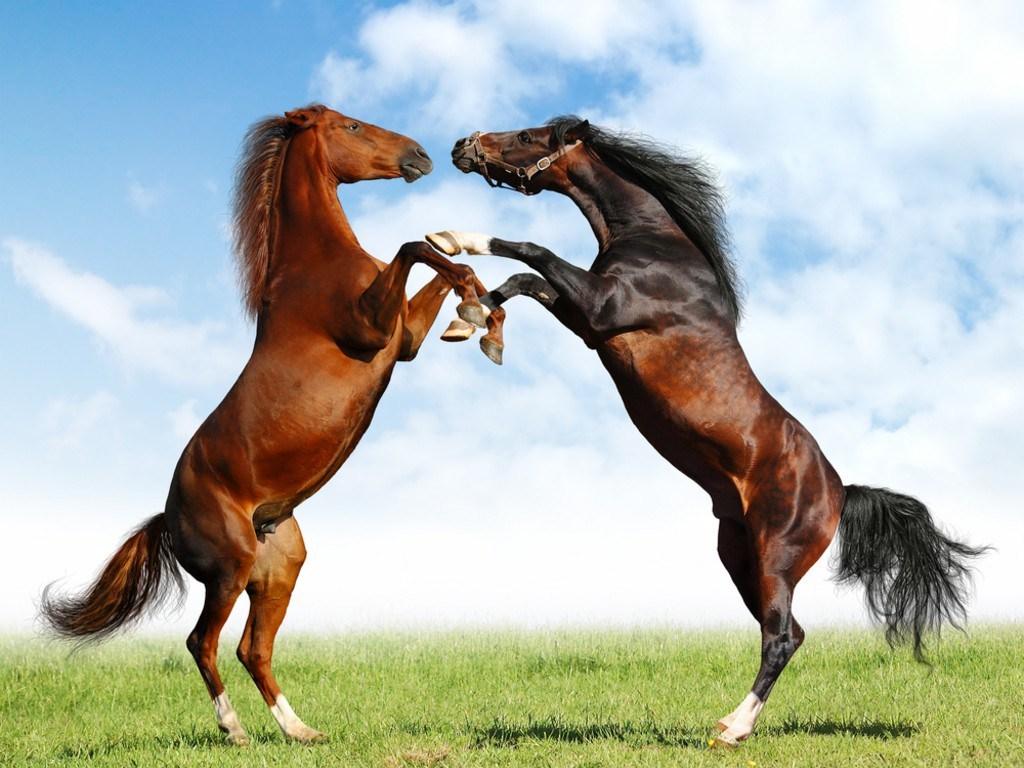 europe-horses
