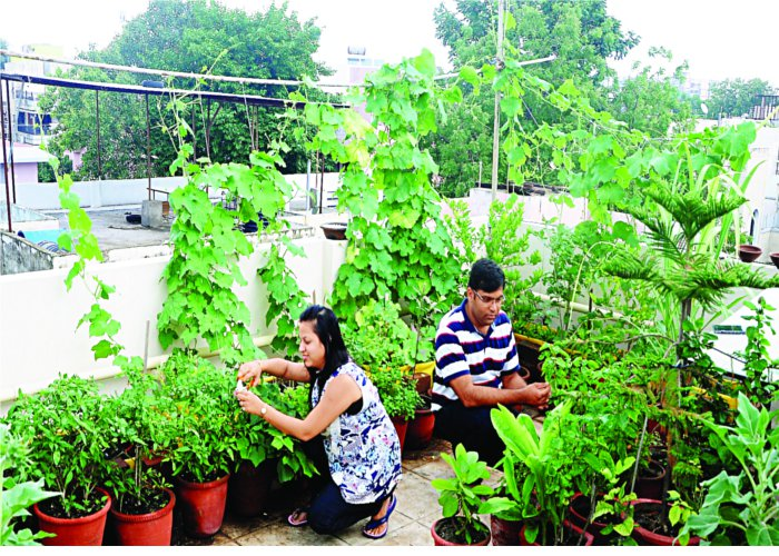 लगाए पौधे