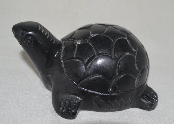 tortoise1-1452059428