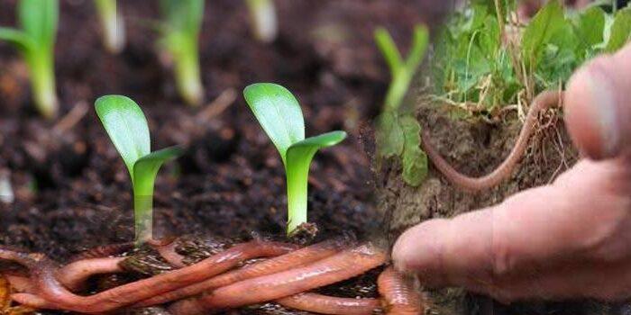 बिना पैसे खर्चे जैविक खाद् देती है अच्छी फसल ( organic fertilizer benefits )