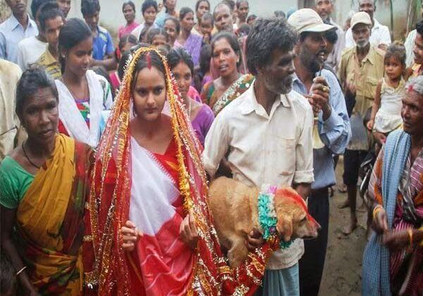 यहाँ करती है लडकियाँ कुत्तो से शादी और कुत्ता बनता है दूल्हा ( here is a married girls dog )