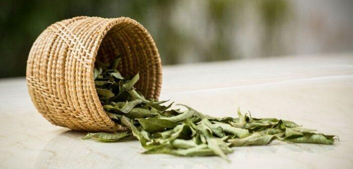 करी पत्ते के सेवन से मिलता है कई रोगो में लाभ ( talking advantage of the curry leaves )