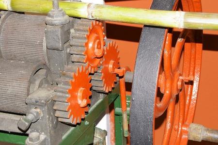 sugarcane_2504