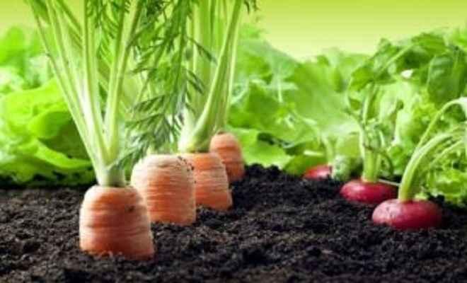 खेती करने का हो शौक तो ज़मीन की भी जरूरत नही बस छत होना चाहिए ( amazing roof farming )