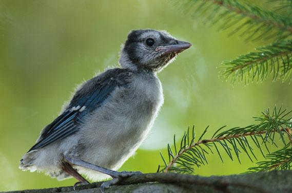 दुनिया के ऐसे 5 पक्षी जो बहुत सुंदर दिखते है ( most beautiful birds in world )