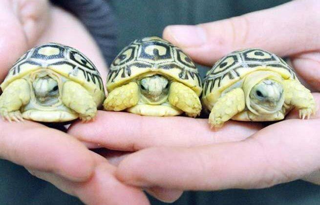 कछुआ देता है धन लाभ और सफलता जीवन में ! ( amazing astro benefits of tortoise )