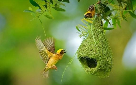 प्रकृति के अद्भुत  भवन निर्माण कर्ता ( 5 amazing nature architecture bird )