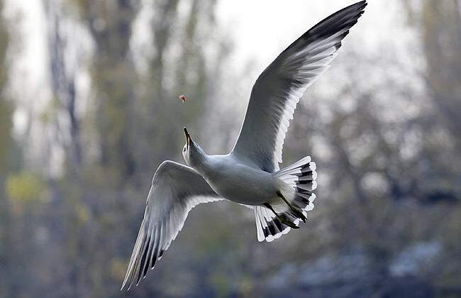 दुनिया के सबसे खूखार पक्षी ये कहलाते है ( most deadly birds in world )