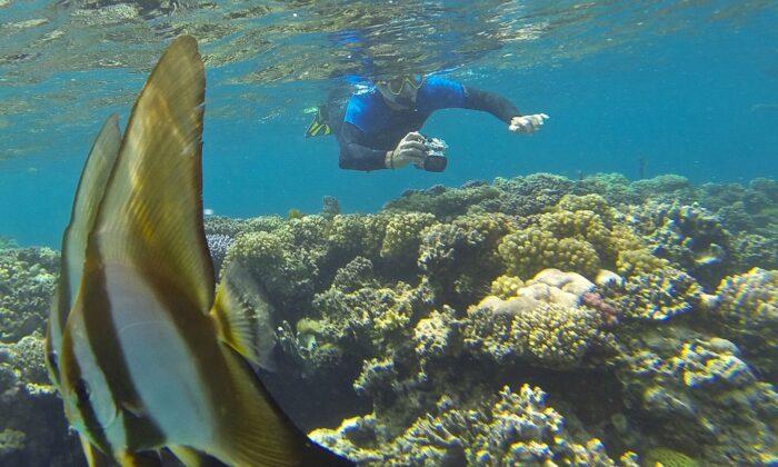 समुन्द्र के नीचे छुपी है अद्भुत पर खतरनाक दुनियाँ ( amazing adventure of the sea world )
