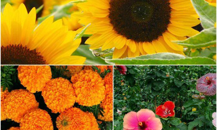 मनमोहक फूलों के चमत्कारी औषधीय गुण ( miraculus ayurvedic assests of five attractive flowers )