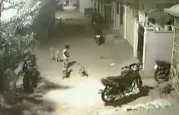 नन्हा बच्चा जब फ़स गया आधे दर्ज़न कुत्तो के बीच…तो हुआ ये देखिए इस वीडियो में ( cctv footage was being captured on the brave of this small child )