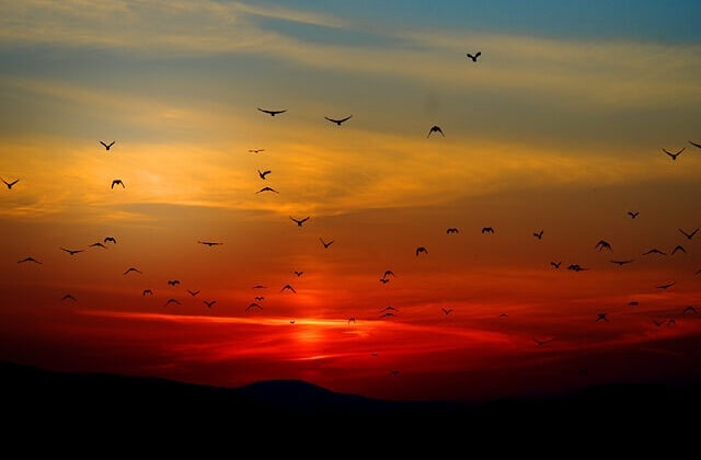 क्या पक्षी भी करते है आत्महत्या? जानिए इस रहस्य को ( birds are suicide in jatinga assam )