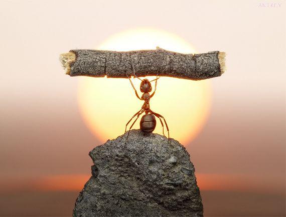 ants power