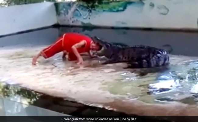 वीडियो :  भूखे मगरमच्छ के मुंह में रख दिया इस आदमी ने अपना सिर, और हुआ फिर…. ( a crocodile bite mans head )