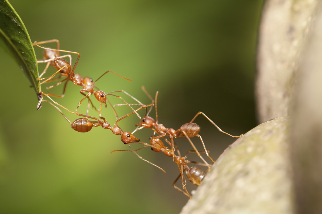 division of labour in ants