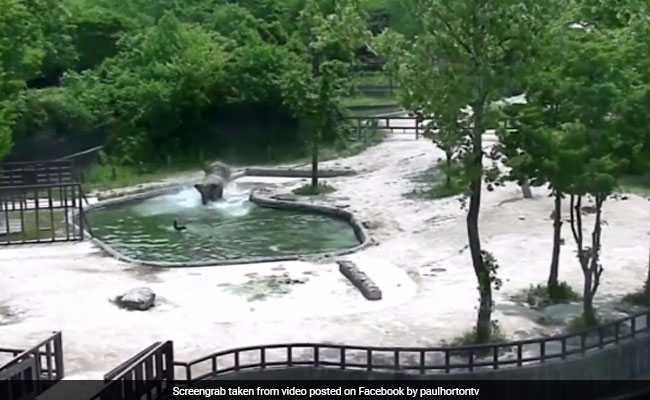 वीडियो: देखें कैसे बचाया हाथी के जोड़े ने नन्हे हाथी को डूबने से ( two adult elephants save a calf from drowning in pool at south korea zoo )