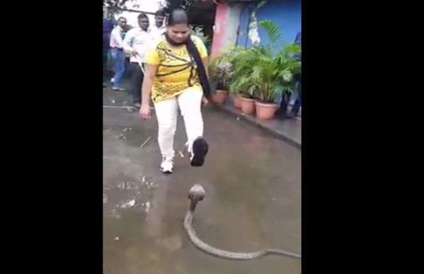 फुंकारते नाग को ऐसे किया महिला ने डिब्बे में कैद, वीडियो हुआ वायरल ( woman grabs snake and put into plastic bottle facebook viral video )