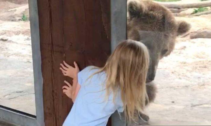 वीडियो: चिड़ियाघर में खूंखार भालू के साथ खेलती 6 साल की बच्ची ( viral video 6 year old little girl playing peek a boo with dreaded bear at the zoo )