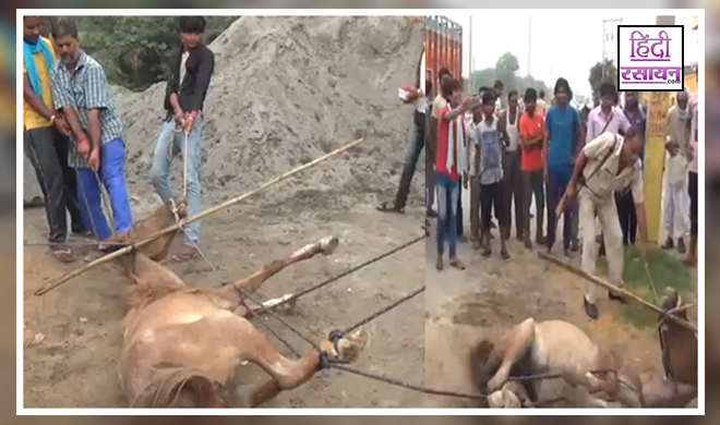In Haryanas Jind Men Hanged A Horse With The Help Of Police