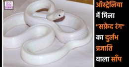 Rare White Snake Found In Australia Forest By Territory Wildlife Park