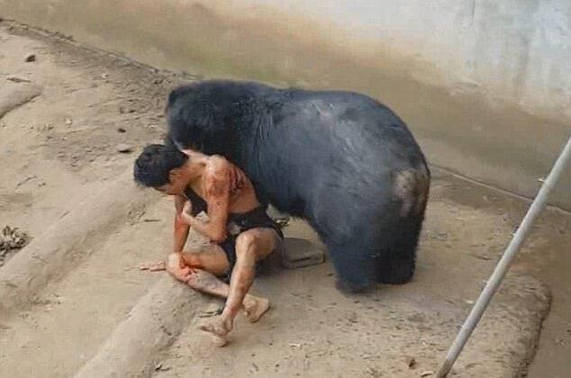 वीडियो: भूखे भालू से मजाक करना टूरिस्ट को पड़ा भारी, बाड़े में खींच किया अधमरा ( viral video man mauled by bear after he teased it with food in thailand )