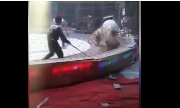 शेर को लात मारना पड़ गया भारी घोड़े पर, वीडियो हुआ वायरल ( viral videoa lion and a tiger attack a horse at a chinese circus )