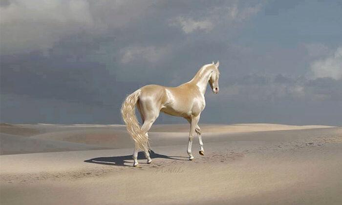 """धरती पर मौजूद है """"स्वर्ग का घोड़ा"""", तस्वीरें हुई वायरल ( viral photo the horse of heaven akhal teke )"""