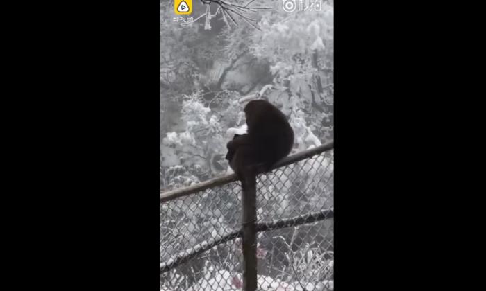 वीडियो: बदमाश बंदर ने टूरिस्ट का पर्स चुरा सारे पैसे हवा में उड़ा दिए ( naughty monkey flies cash in air )