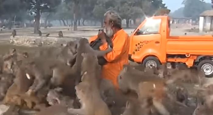 """जब अचानक 100 से ज्यादा बंदरो ने घेर लिया """"बूढ़े आदमी को"""",  वीडियो में देखे आगे क्या हुआ ( viral video 100 monkeys surrounded a man )"""