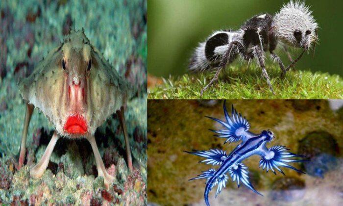 """अजीबो-गरीब जीव"" जो इस दुनिया के बिलकुल नही लगते ( these amazing strange creatures on the earth )"