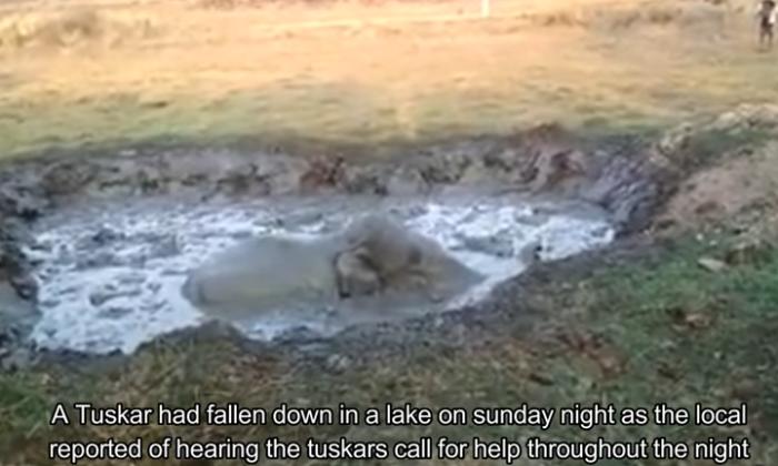 वीडियो: दलदल में 12 घंटे फंसा रात भर रोता रहा हाथी का बच्चा ( viral video elephant rescue from swampy pit karnataka forest department animal rescue india )