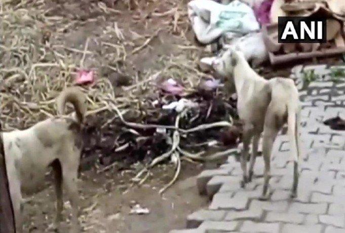 कुत्तों का आतंक