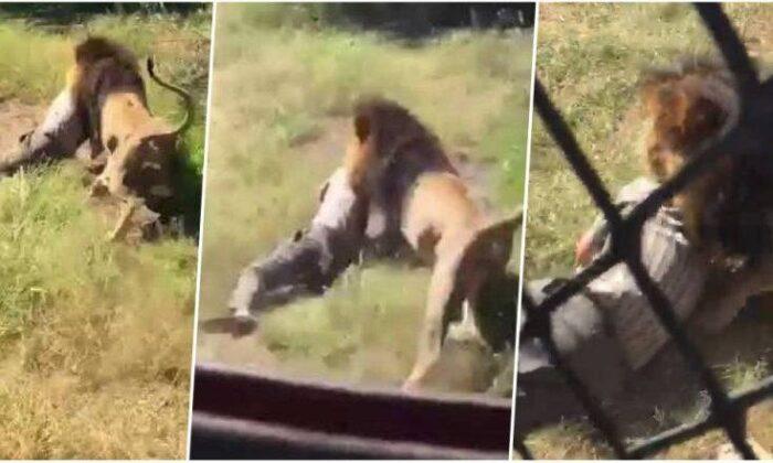 वीडियो: जिसने पाला उसी मालिक को शेर ने अपना शिकार बना डाला ( lion attacked to his owner in south africa )