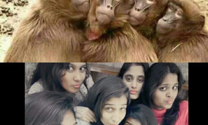 इन 10 तस्वीरों से लगता है, ये प्राणी बंदरो से कम नहीं ( 10 funny pictures only for fun )